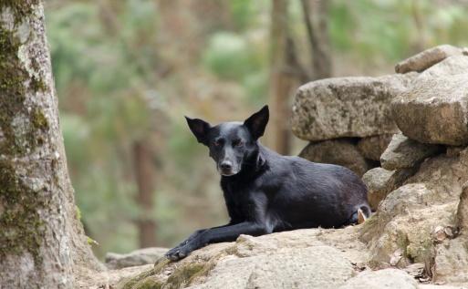 An animal spirit on the altar