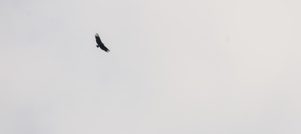 The vultures were circling, but they were thwarted when I got some lunch and survived.
