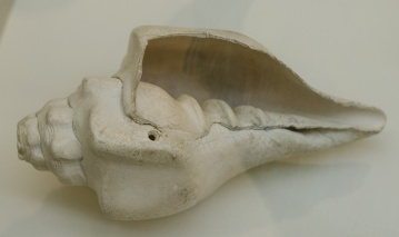 A musical instrument - the conch