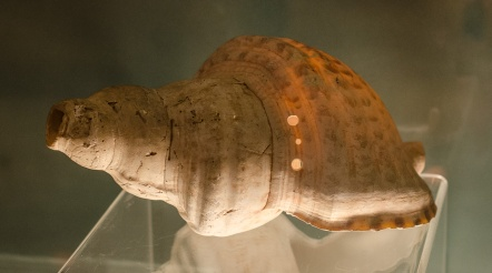 Conch shells were valuable and could be used as musical instruments (this one wasn't)
