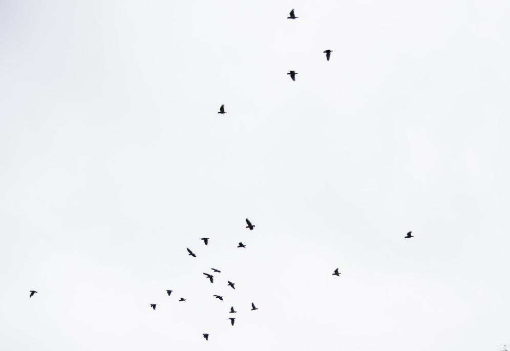 A flock of parrots!!!
