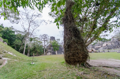 Nests woven by their owners