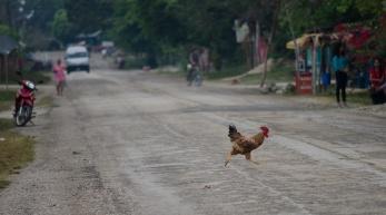 ¿por que la gallina cruzo la calle?