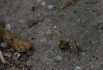 Leafcutter ants were everywhere