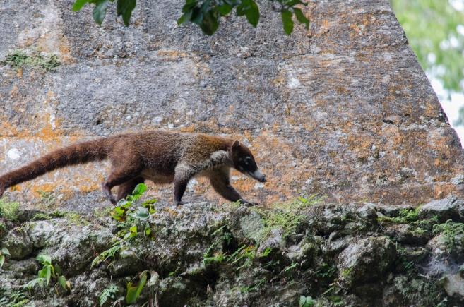 Tikal Day 1-26-26