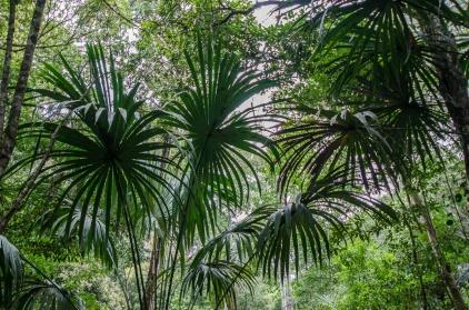 Tikal Day 1-30-30