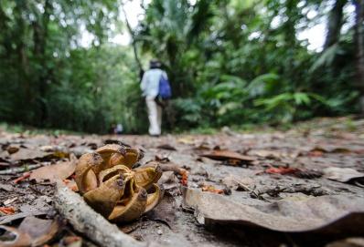 Tikal Day 1-33-33