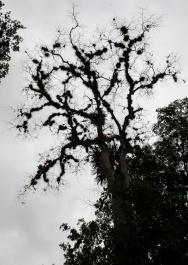 Tikal Day 1-38-38