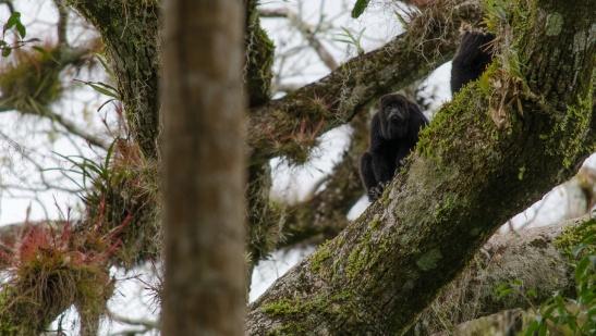 Tikal Day 1-45-45