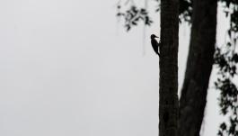Tikal Day 1-46-46