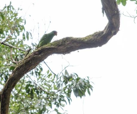 Tikal Day 1-50-50