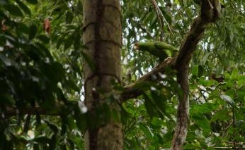Tikal Day 1-51-51